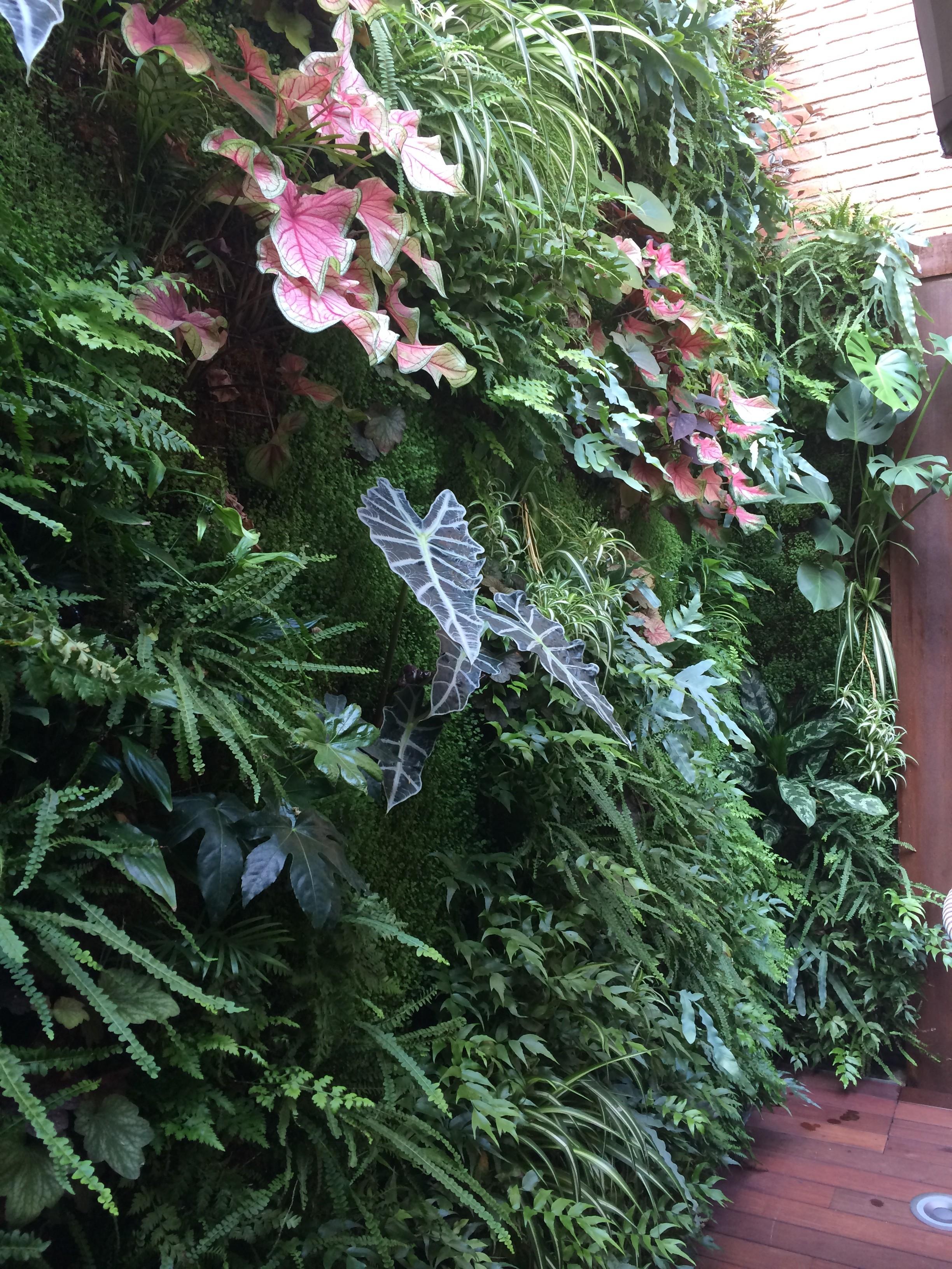 Realizaci n de jardines verticales en sevilla babilonia for Jardines verticales sevilla